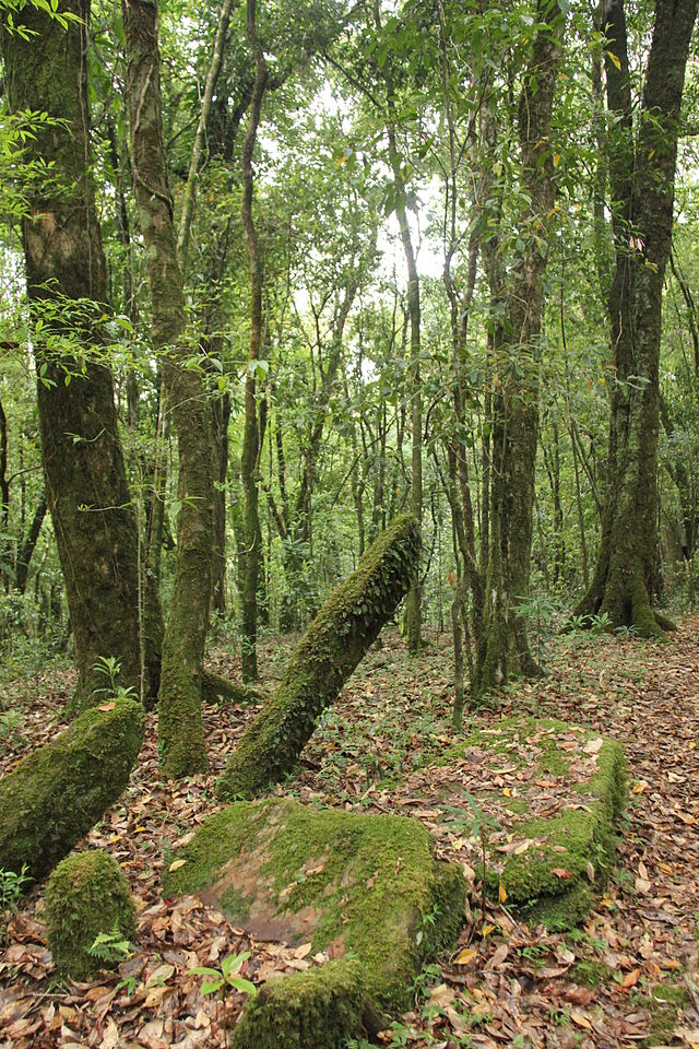 Ancient_monoliths_in_Mawphlang_sacred_grove