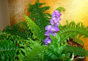 szukamy-kwiatu-paproci