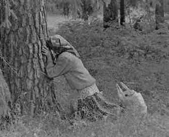 czec59bc487-oddawana-drzewom