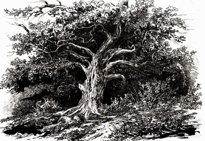 slavic_mythology__the_holy_oak_by_masiani-d7l8o97